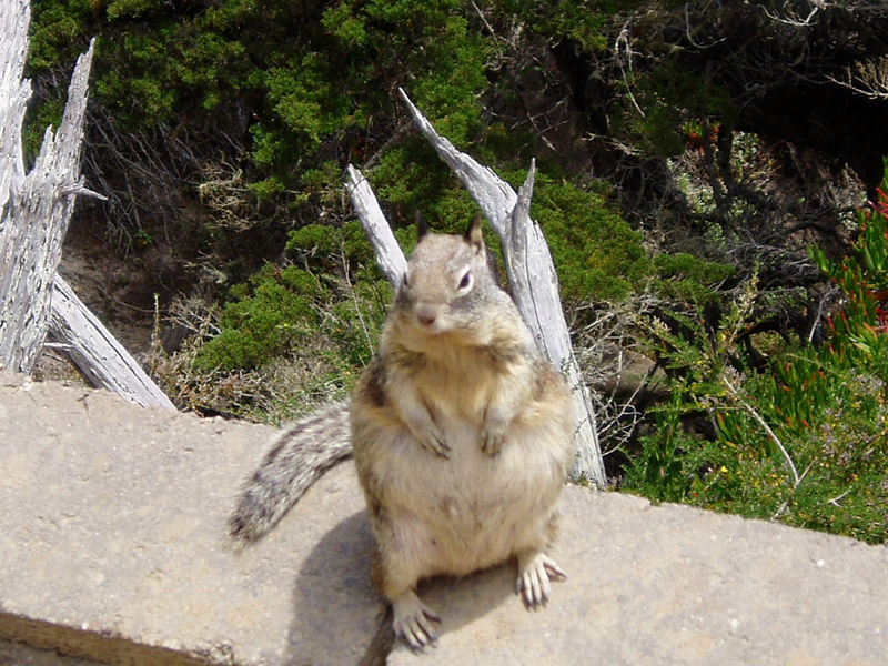 What is the world record for the largest squirrel | South